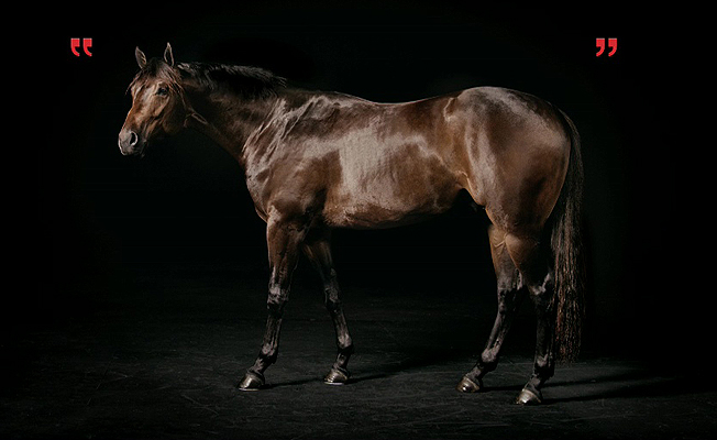 Purina 'One Horse's Story'